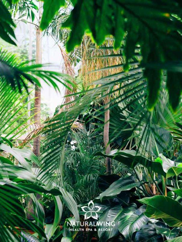 Tropical Enviroment Natural Wing Spa Koh Samui